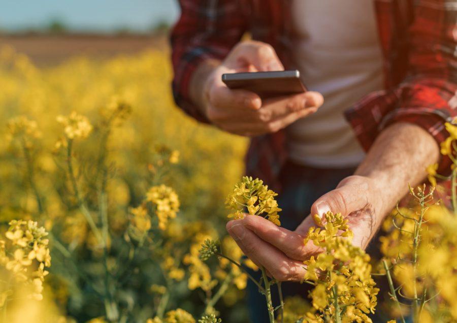 Gute Inhalte auf dem richtigen Kanal – Social Media für Direktvermarkter